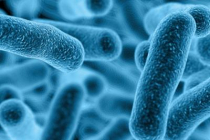 Information About Legionella And How You Can Prevent It