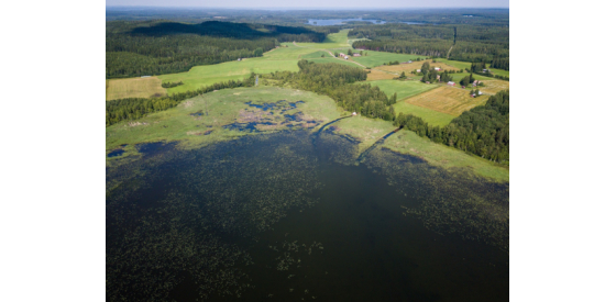 aerial view of organic matter in a lake that is green with vegetation
