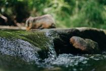 Taste in Drinking Water — Water Library | Acorn Water