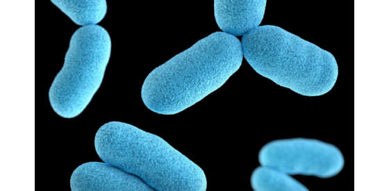 close up photo of rod-shaped bacteria that are blue with a black background