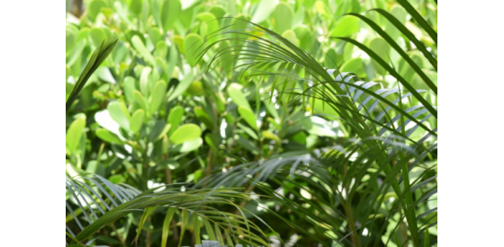 thick green vegetation