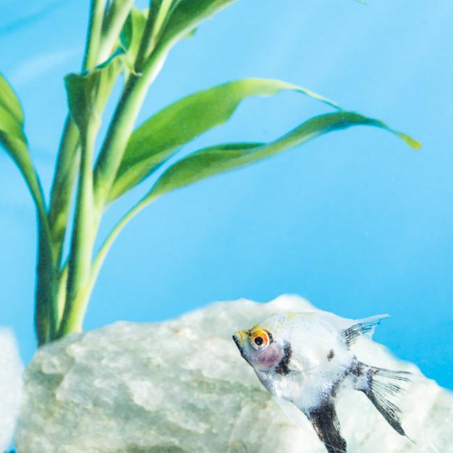 a fish in a home aquarium