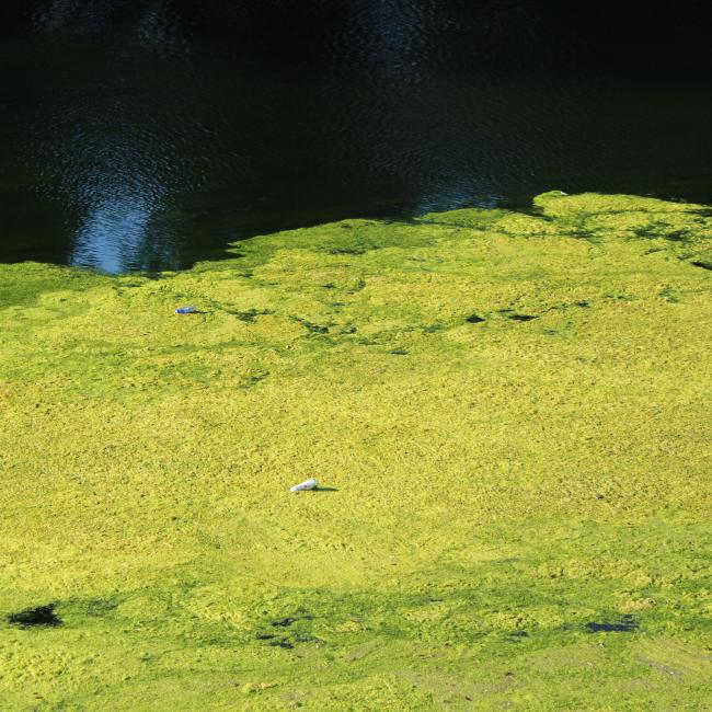 Pond Water Test