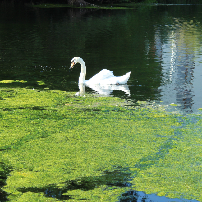 Algae Bloom (Eutrophication) Test